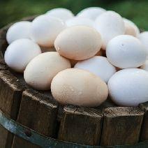 Яйцо куриное домашнее с фермы 10шт