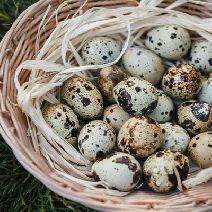 Яйцо перепелиное домашнее с фермы 20шт